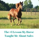 The #1 Lesson My Horse Taught Me About Sales